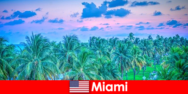 Miami breathtaking nature with great tropical wilderness