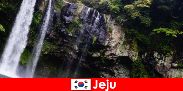 Jeju in South Korea, the subtropical volcanic island with breathtaking forests for foreigners