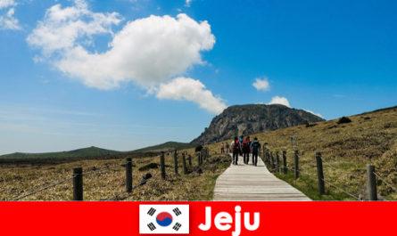 Tourists hike through the fantastic natural landscape in Jeju South Korea