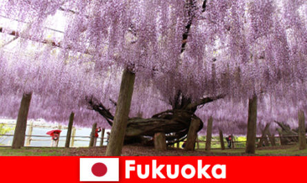 Nature travel for strangers in the untouched nature of Fukuoka Japan