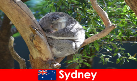Destination Sydney Australia in the exotic zoo with an overnight experience