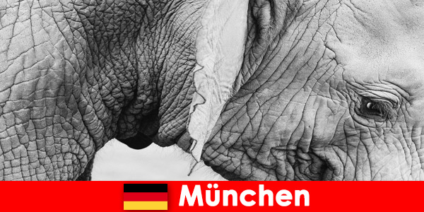 Special trip for visitors to the most original zoo in Germany, Munich